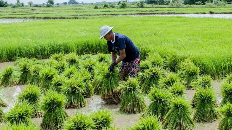 Myanmar: Analysis of Farm Production Economics